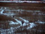 2008_12_26 Elke Deer