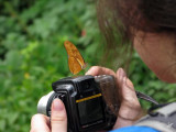 2009_03_24 Quick - take a picture butterfly at Iguazu Falls