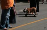 2010_07_11 Skateboard Dog