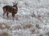 2010_11_21 Deer Family caught by Elke