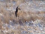 deer captured by Elke.jpg