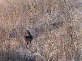2010_11_23 Deer Fun