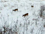 2011_01_04 Elke Deer