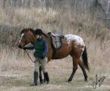 2005_12_10 Horses