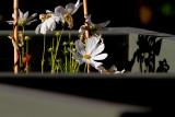 flower-640mm-7D.jpg