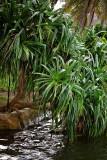 1. Kipar (Pohnpei name) IMG_4186.jpg