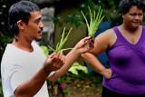 Introduced plants. IMG_3521.jpg