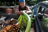 Straining to pull out some bananas from the truck bed. IMG_7803.jpg