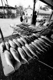 Skipjack tuna and mahi mahi. IMG_0606.jpg