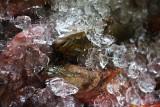 Iced. IMG_0669.jpg
