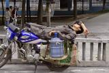 Taking a snooze on the back of a motorcycle.jpg