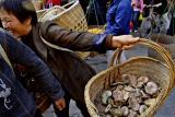 Got mushrooms. Jishou City, China.
