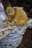 Orange Cat on bag.