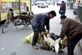 Using the necks of live ducks to haul them around. Jishou City, China.