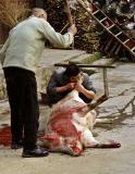 Pig slaughter. Yaun Kou, Guizho Province, China