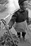 Bringing in vegetables from the field, Panzai, Guizhou Province, China
