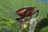 2. Colorful Hemiptera.