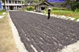 Chopped black plastic being dried in the sun near the highway before ascending to the mountain villages.