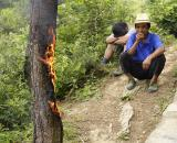Burning a pine tree to death. 1