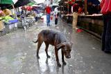 Rainy day dog.