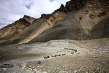 Road to the base camp at Mt. Everest. Horses are used to move people and supplies back and forth.