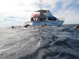 Exmouth diving (15) Whale Shark.jpg