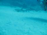 Ningaloo Marine Park - Whale Sharks and diving - Exmouth, WA.
