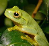 Amphibia & Reptilia