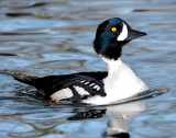 Goldeneye Barrows D-003.jpg