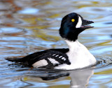 Goldeneye Barrows D-004.jpg