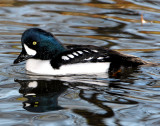 Goldeneye Barrows D-005.jpg