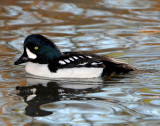 Goldeneye Barrows D-006.jpg