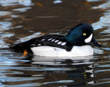 Goldeneye Barrows D-007.jpg