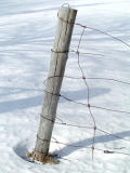 A Wired Pole