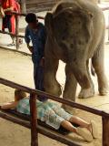 Elephant Massage