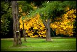 Golden, Kew