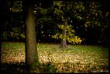 Leaf Fall, Kew