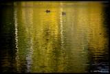 Pair Floating, Kew