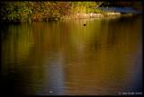 Autumn Colour Reflected, Kew