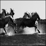 Manes Rush By