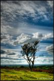 Lone Tree, Big Sky...