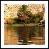 Shoreline Palm