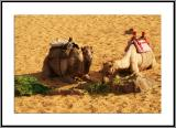Camel lunch