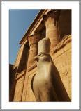 Horus has a new Hat