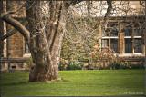 Tree in Trinity