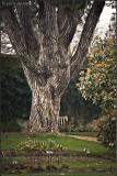 Tree and Folds