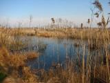 Rezerwat Somine(IMG_7145.jpg)