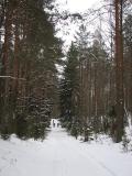 Las Linkmenu miškas(IMG_2173.jpg)