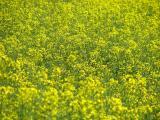 Wiosenna łąka(IMG_2938.JPG)