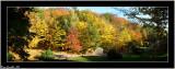 Wonderful autumn colour